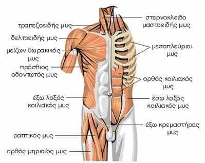 Ελληνικό Bodybuilding Forum - Bodybuilders.gr