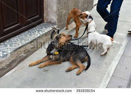Dogs Are Waiting For Their Dog Walker