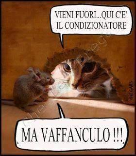 Spezziamo una lancia a favore del topolino: è intelligente!Fiorella