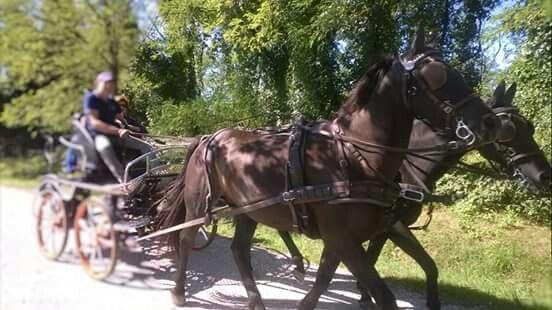 Cavalli in ippovia