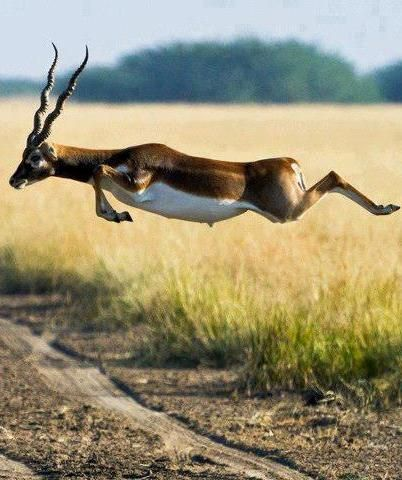 Magnificent Springbok, South Africa See More Pictures | #SeeMorePictures