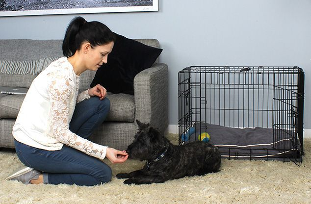 How To Crate Train An Older Adult Or Rescue Dog Crate Training