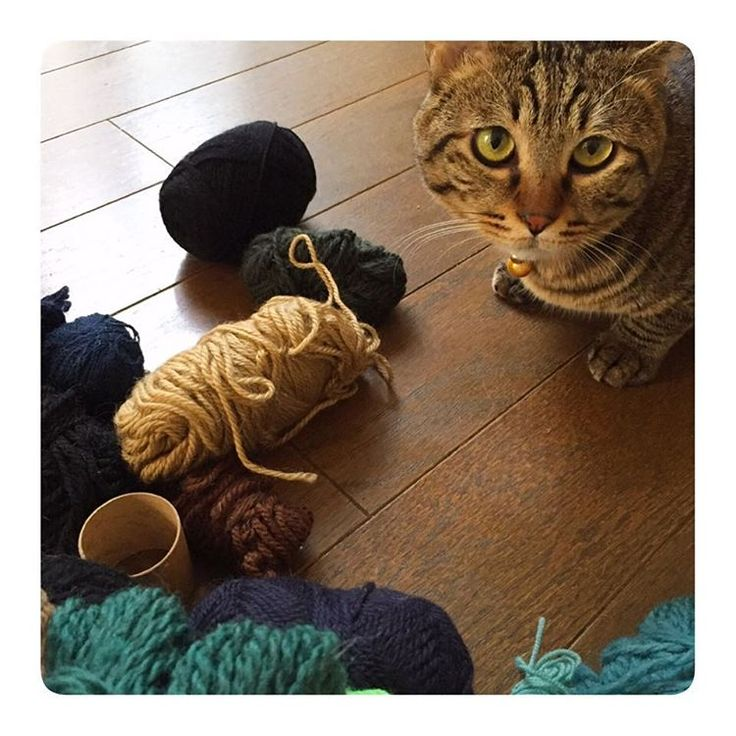 これボクにくれたん?  違います。遊ばないでください、 って、床に出したの間違い。  #うちのニャ #うちのぶぅぶぅ #ねこ#とらねこ#毛糸#編み物#余り毛糸#ハンドメイド#ぼんぼり 作る #バッグ に付ける #cat#catstagram #mycat#wool#woolenyarn