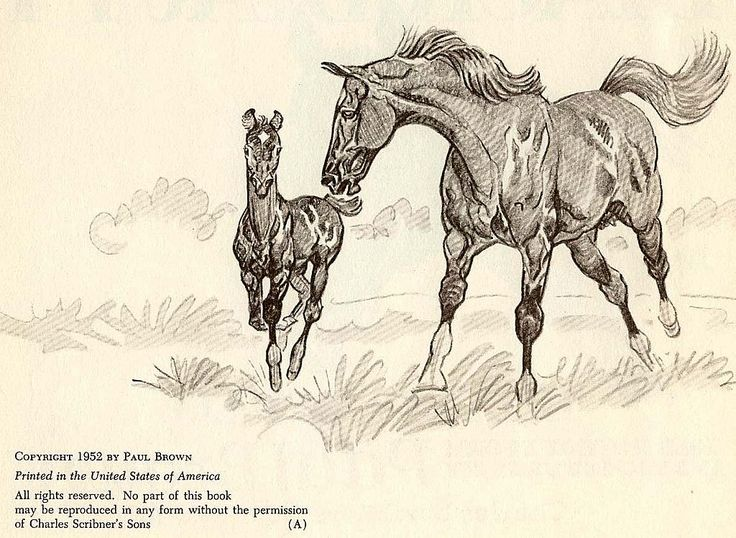 1952 'Black Beauty' Paul Brown Equestrian Art, 1st Ed - Anna Sewell, Horses, Collector's Vintage - #horse #book #illustration