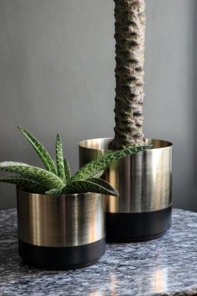 Gold Pot with Black Base - Set of 2
