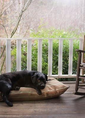 DIY dog treats, bed, spray