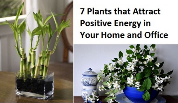 7 Plants That Have The Best Energy For An Office And Home Areas