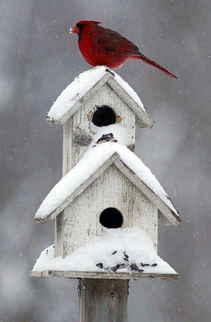 birdhouse/red cardinal