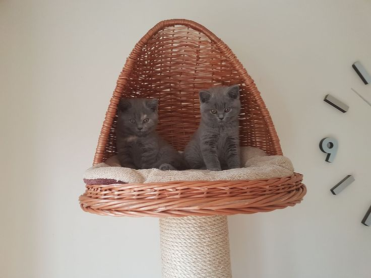 43 best cat trees scratching posts images on pinterest. Black Bedroom Furniture Sets. Home Design Ideas