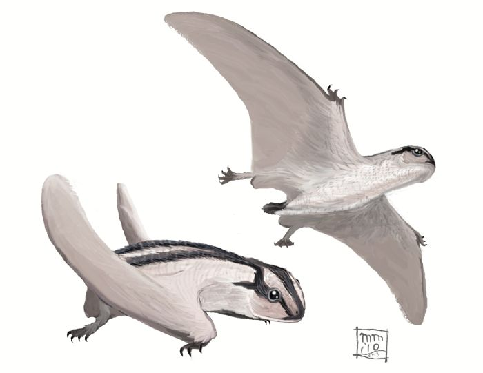 """Dendrorhynchoides by Matt:  """"(…) anurognathids are weird. Furry frog-bats. With furry edges to their patagia for silent flight, like the frayed flight feathers of an owl. Short, broad wings = high maneuverability, great for chasing after bugs between tree trunks or out over Yixian lakes. Big, wide frog mouth for catching them. I've seen reconstructions give them long, bug-sensing whiskers like an Owlet-nightjar, though I don't think there's direct evidence for this ("""