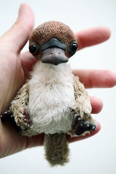 baby platypus   Felt! LOVE!