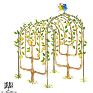 River-Road-Farms-Espalier-Arbor-Tunnel.png