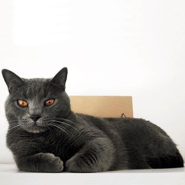 Mi postura favorita para ver pasar el tiempo.  cúal es la vuestra? --- #amorgatuno #mascota #gatofeliz #adoptaungato #gatosdeinstagram #catlovers #bestmeow # #miau  #meow #cats #ilovecat #loveanimals