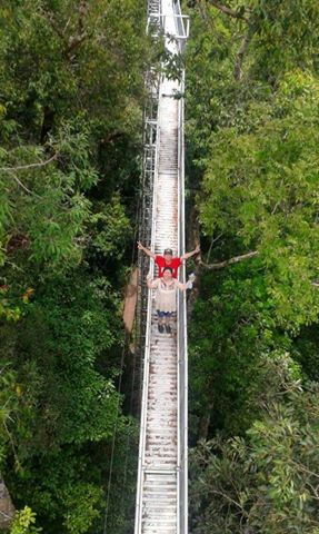 Canopy walk over Ulu Temburong forest, Brunei