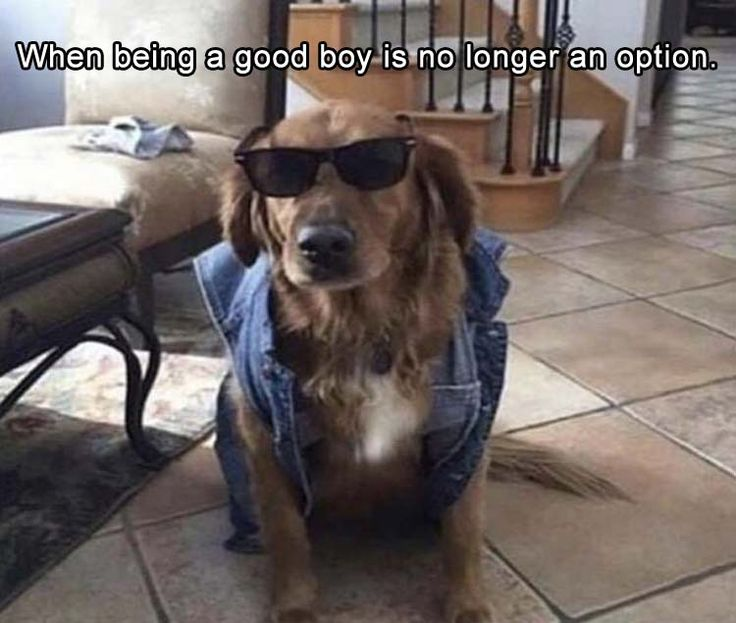 Funny Animal Picture Dump Of The Day 24 Pics: Best 25+ Cute Memes Ideas On Pinterest