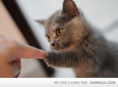 Knuckle Touch: Cats, Animals, Fistbump, Pets, Adorable, Kittens, Kitty, Fist Bump