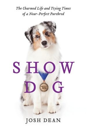 """Fun look at dog shows by a """"non-dog"""" person & it's about an Aussie, what's not to love :)"""