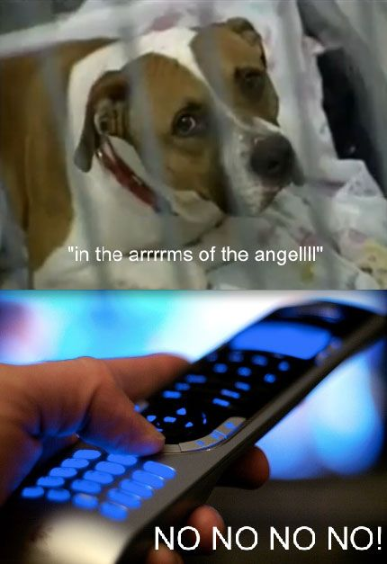 Hahaha hate those commercials: My Life, My Heart, Sarah Mclachlan, So True, Funny Stuff, Humor, So Sad, True Stories, Animal