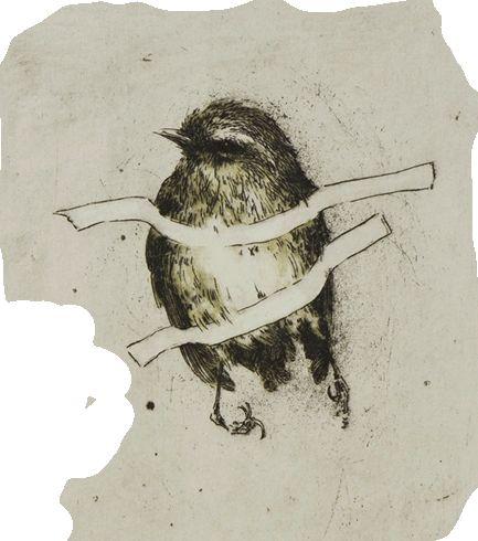 print by Ben Reid, Christchurch printmaker and artist... he's one of my heros. #birds #nz #art #printmaking