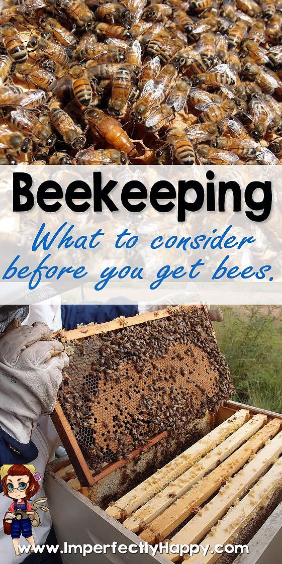 Beekeeping - what to consider BEFORE you get bees! | http://ImperfectlyHappy.com