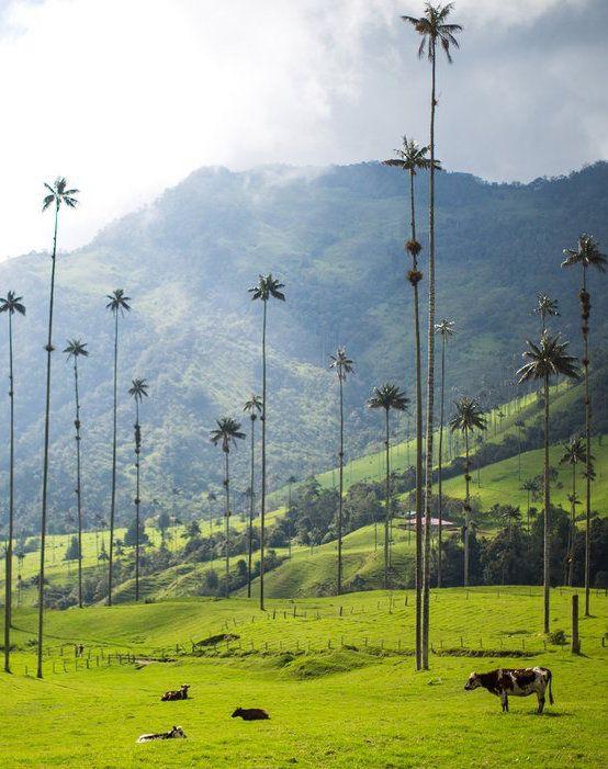 De todo el mundo, uno de estos 50 lugares lo tenemos en Colombia. Valle del Cocora-Quindio