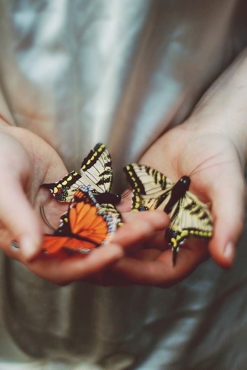 """Happiness is a butterfly which when pursued is always just beyond your grasp, but which if you will sit down quietly, may alight upon you."" — Nathaniel Hawthorne"