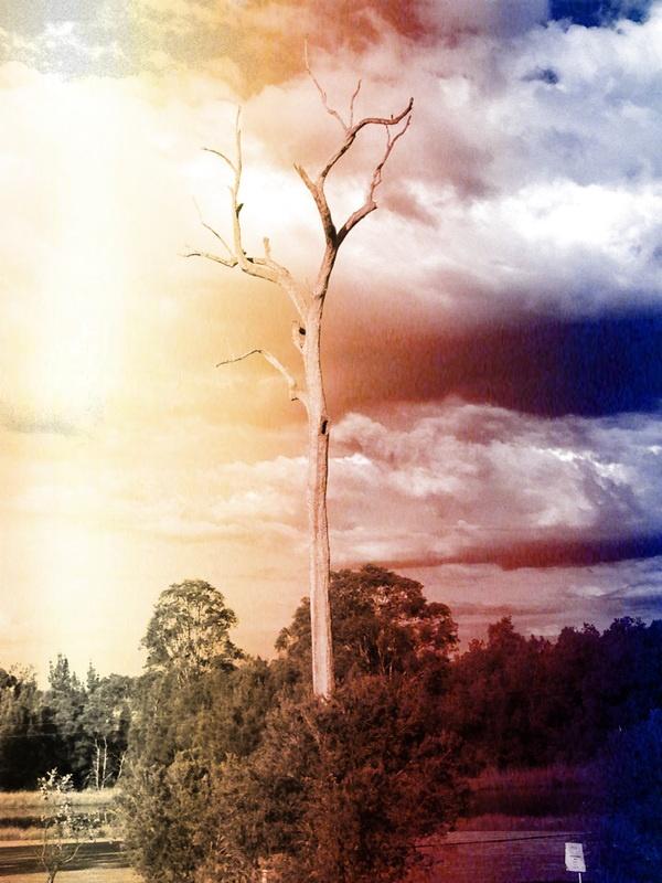 Pixlr makes your photos look fantastic.  Hunter Valley, Australia