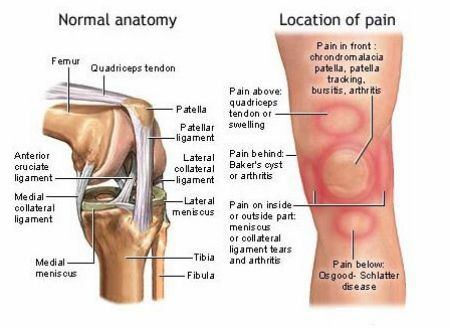 25+ best ideas about ligaments of the knee on pinterest | acl, Muscles