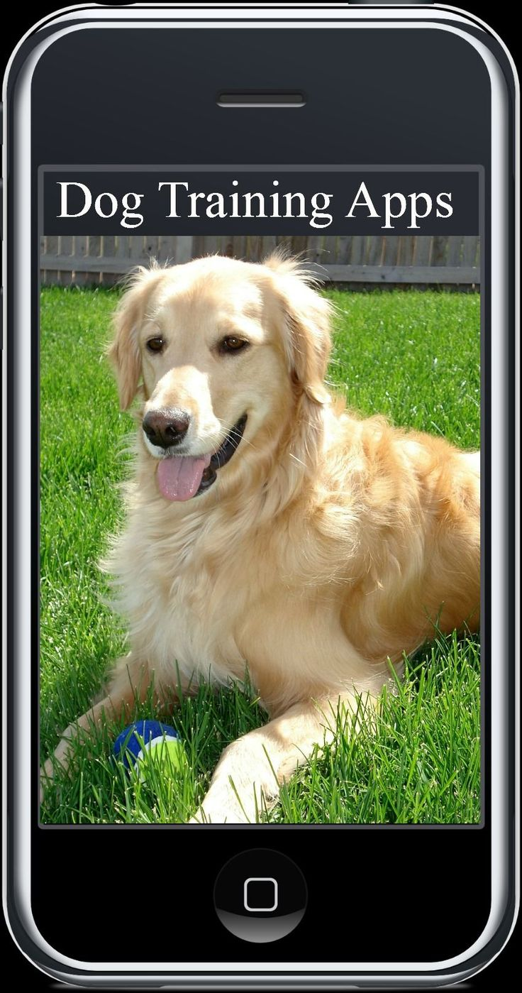 119 best Service dog training images on Pinterest | Service dog ...