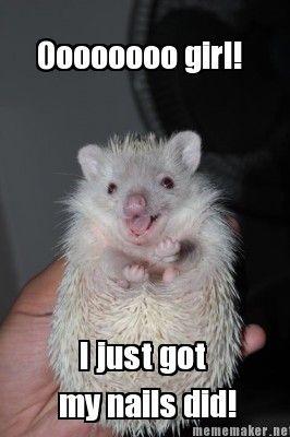hedgehog memes | Cute Hedgehog Memes