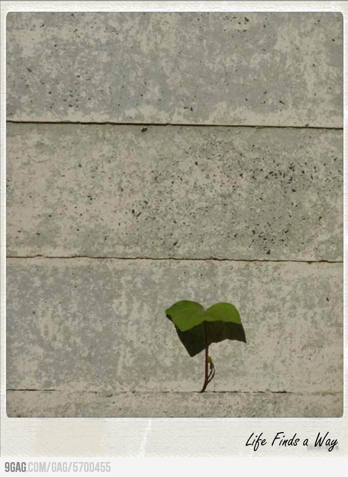 Life Finds a Way  #Quotes