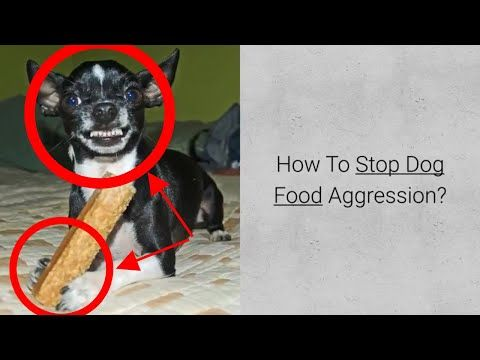 How To Stop Dog Food Aggression Check 4 Steps In Food Agression