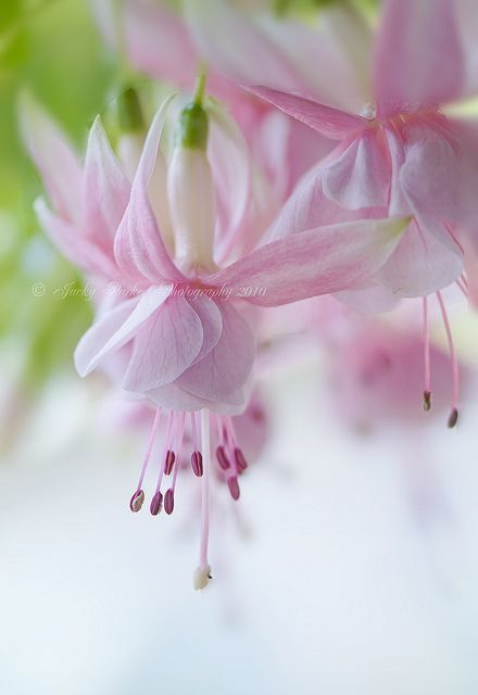 Candy pink color flowers.
