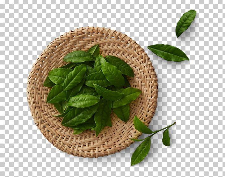 Green Tea Matcha Tea Production In Sri Lanka Black Tea Png Background Green Basil Chinese Tea Food Drinks Golden Monke Matcha Green Tea Matcha Matcha Tea