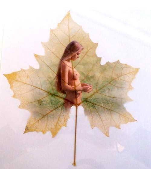 Longal Artwork. Волшебство резного листа...  (71 фото)