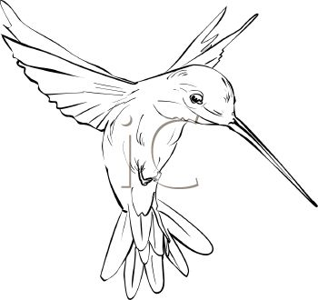 hummingbird art | Royalty Free Hummingbird Clipart