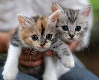 В Киеве появился детский сад для котят и щенков | Интернет-журнал «Наш Киев»