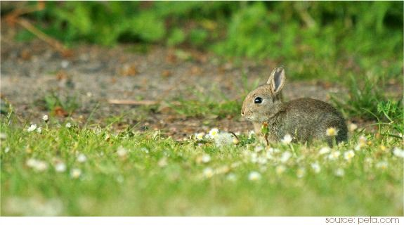 Rabbit symbolizes the imagination, opening vast realms and networks of new ideas. Just think of Alice in Wonderland and you get the idea of how the Rabbit is a creative genius with the use of his imagination...