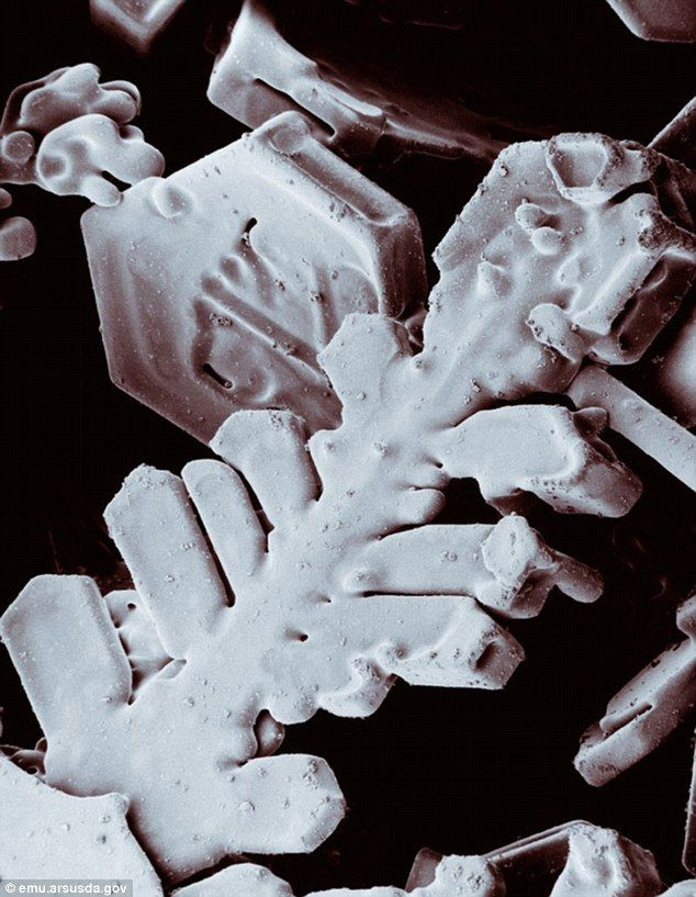 Stunning images of snowflakes under a (frozen) microscope