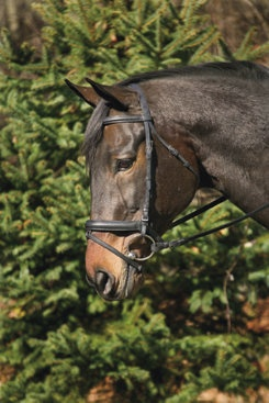 Henri De Rivel Raised/ Padded Dressage Bridle includes a jawband caveson with flash for extra control and leverage