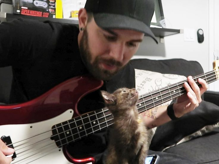 Still not really a fan of cats, but, I can dig one that likes the bass!