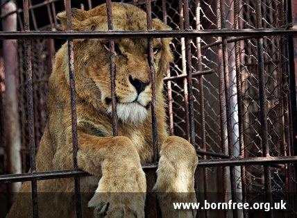 zoos prison or sanctuaries Aquariums-animal zoos-parks- walk-through zoos-drive-through zoos-animal sanctuary (open to public.