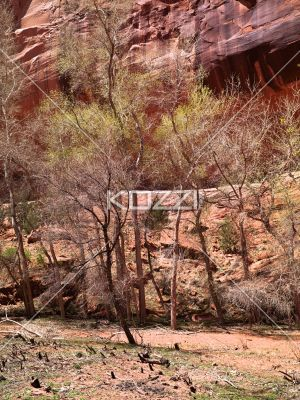 view of trees and cliff. - Image of trees and cliff.