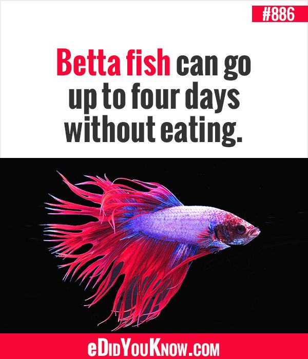 1000 images about did you know random facts on pinterest for Fun fish facts