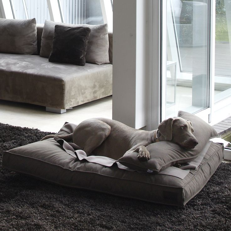Dog Accessories Pillow Divano Mud...Jenna is so spoiled when she comes into the house. She would love this bed!!