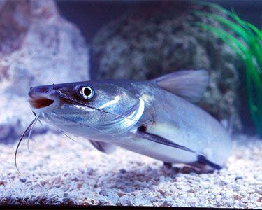 Best 25+ Freshwater aq...