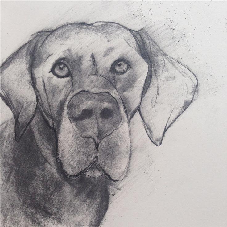 Charcoal sketch of a dog. Original artwork by Charles Hannah