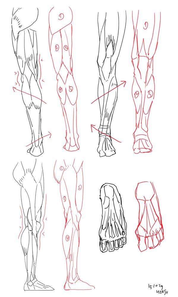 194 best Anatomy - Legs images on Pinterest | Anatomy reference, Art ...