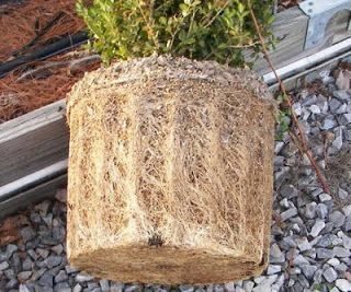 """This is a great gardening tip from Thomas Rainer: """"The Best Planting Tip I Ever Received"""" - """"A significant portion of plants that don't live are because they are too root bound and can't absorb water...read more"""