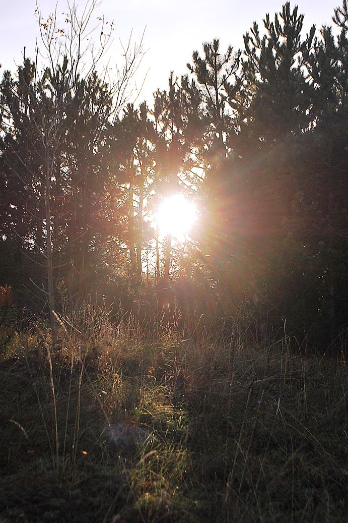 Zubán Diána Őszi fények  A kép a Kálvária dombra felfelé menet készült, Bodajkon. Több kép Diától: http://tilltall.tumblr.com/